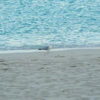 Seagull on Miami Beach